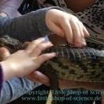 LittleShopOfScience_Kaiman_2013-03-08_Kinderhaende